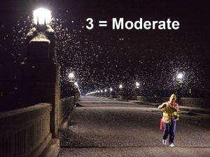 Moderate Mayflies