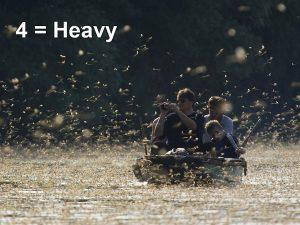 Heavy Mayflies