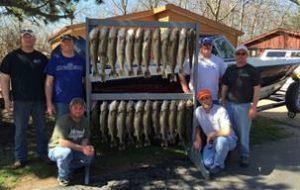 Lake Erie Walleye